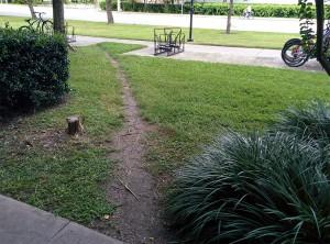 Desire Path from University Parking Garage